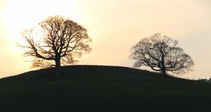 On the Brook - trees on hill