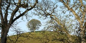 Shot of Tree on Hill from Wood - Our Wood